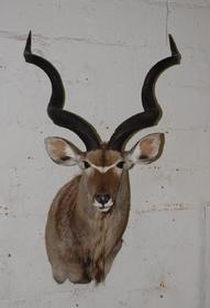 Name:  Kudu.jpg Views: 66 Size:  9.5 KB